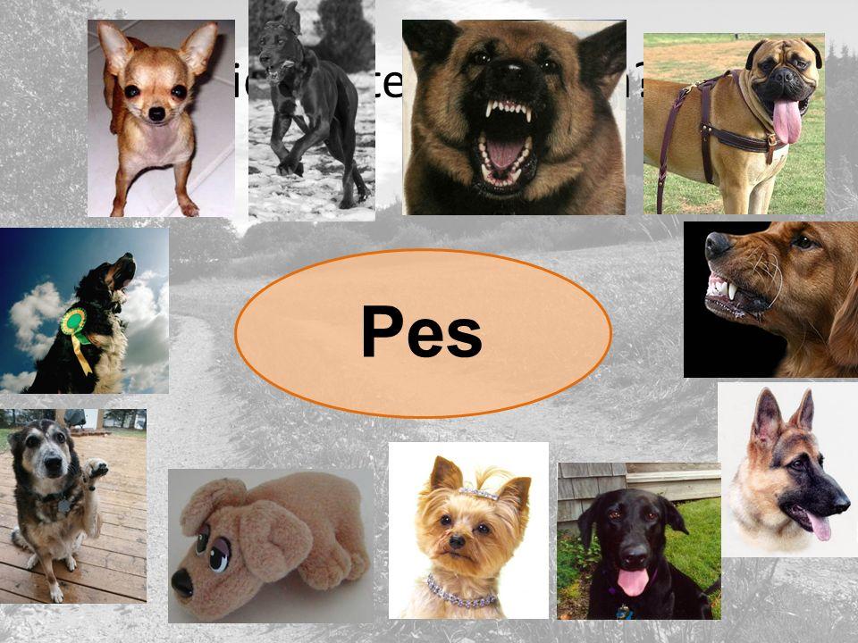 Viděli jste někdy psa? Pes