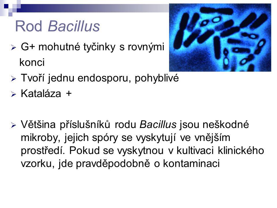 Rod Bacillus  G+ mohutné tyčinky s rovnými konci  Tvoří jednu endosporu, pohyblivé  Kataláza +  Většina příslušníků rodu Bacillus jsou neškodné mi