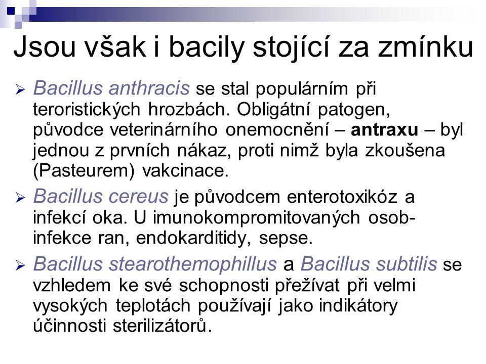 Jsou však i bacily stojící za zmínku  Bacillus anthracis se stal populárním při teroristických hrozbách. Obligátní patogen, původce veterinárního one
