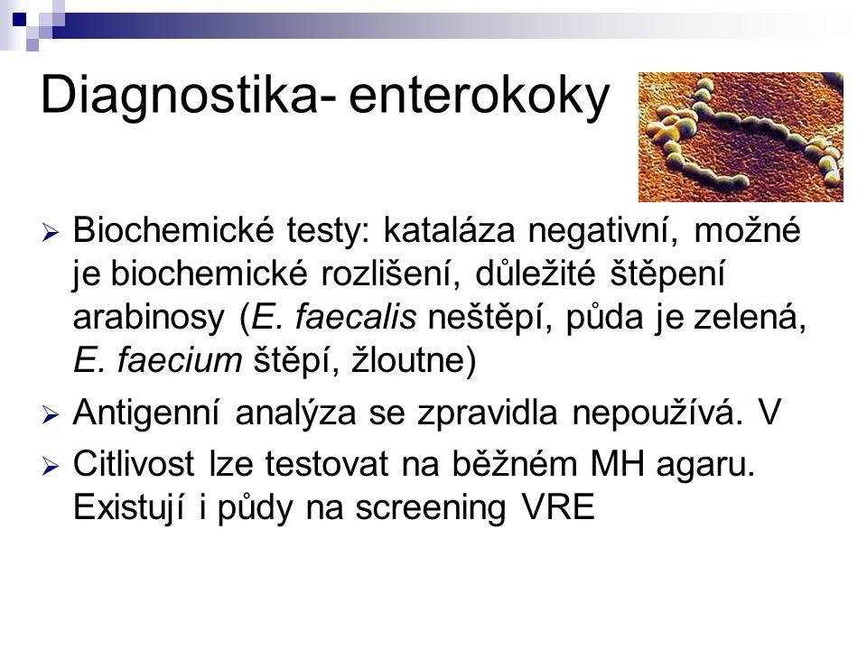Diagnostika- enterokoky  Biochemické testy: kataláza negativní, možné je biochemické rozlišení, důležité štěpení arabinosy (E. faecalis neštěpí, půda