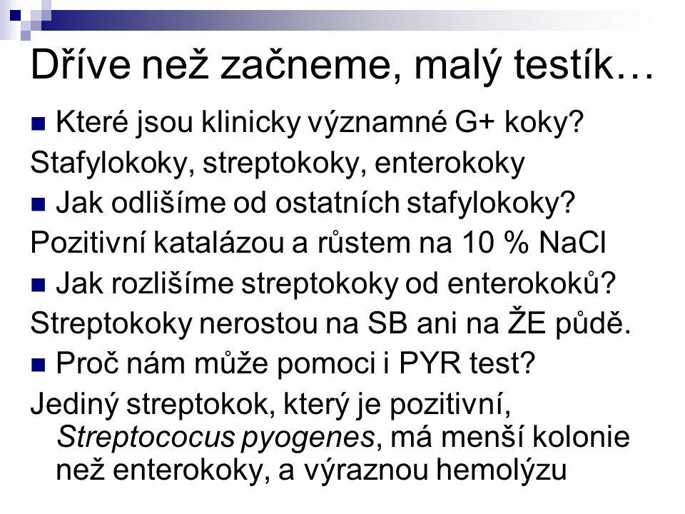 Dříve než začneme, malý testík… Které jsou klinicky významné G+ koky? Stafylokoky, streptokoky, enterokoky Jak odlišíme od ostatních stafylokoky? Pozi