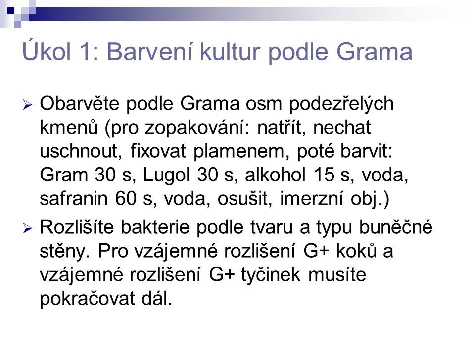 Úkol 1: Barvení kultur podle Grama  Obarvěte podle Grama osm podezřelých kmenů (pro zopakování: natřít, nechat uschnout, fixovat plamenem, poté barvi