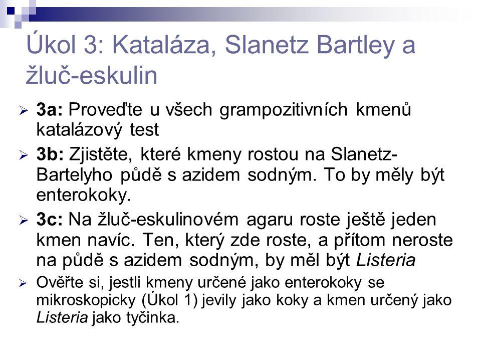 Úkol 3: Kataláza, Slanetz Bartley a žluč-eskulin  3a: Proveďte u všech grampozitivních kmenů katalázový test  3b: Zjistěte, které kmeny rostou na Sl