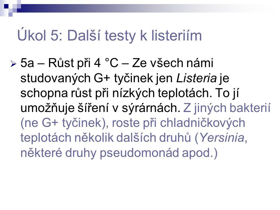Úkol 5: Další testy k listeriím  5a – Růst při 4 °C – Ze všech námi studovaných G+ tyčinek jen Listeria je schopna růst při nízkých teplotách. To jí