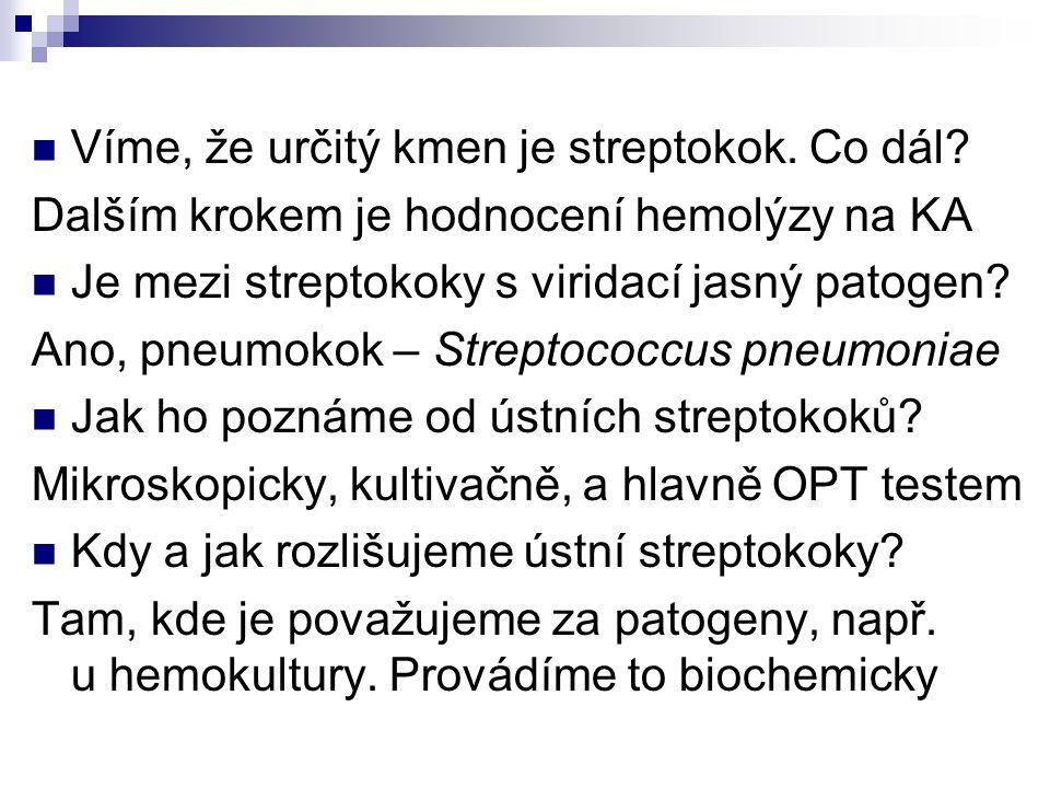 Víme, že určitý kmen je streptokok. Co dál? Dalším krokem je hodnocení hemolýzy na KA Je mezi streptokoky s viridací jasný patogen? Ano, pneumokok – S