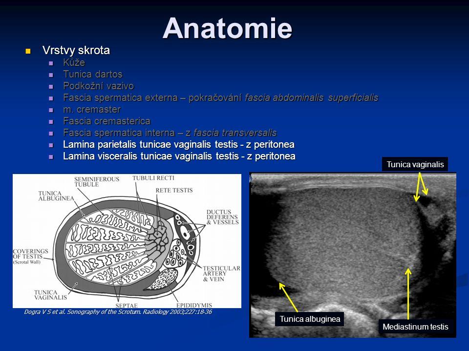 Anatomie Vrstvy skrota Vrstvy skrota Kůže Kůže Tunica dartos Tunica dartos Podkožní vazivo Podkožní vazivo Fascia spermatica externa – pokračování fas