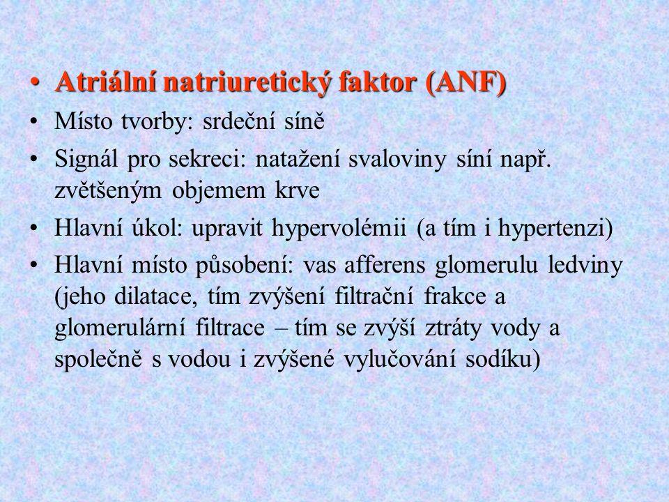 Atriální natriuretický faktor (ANF)Atriální natriuretický faktor (ANF) Místo tvorby: srdeční síně Signál pro sekreci: natažení svaloviny síní např. zv
