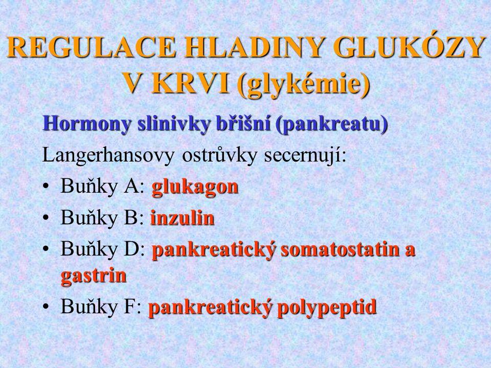 REGULACE HLADINY GLUKÓZY V KRVI (glykémie) Hormony slinivky břišní (pankreatu) Langerhansovy ostrůvky secernují: glukagonBuňky A: glukagon inzulinBuňk
