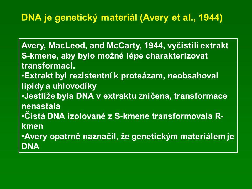 DNA je genetický materiál (Avery et al., 1944) Avery, MacLeod, and McCarty, 1944, vyčistili extrakt S-kmene, aby bylo možné lépe charakterizovat transformaci.