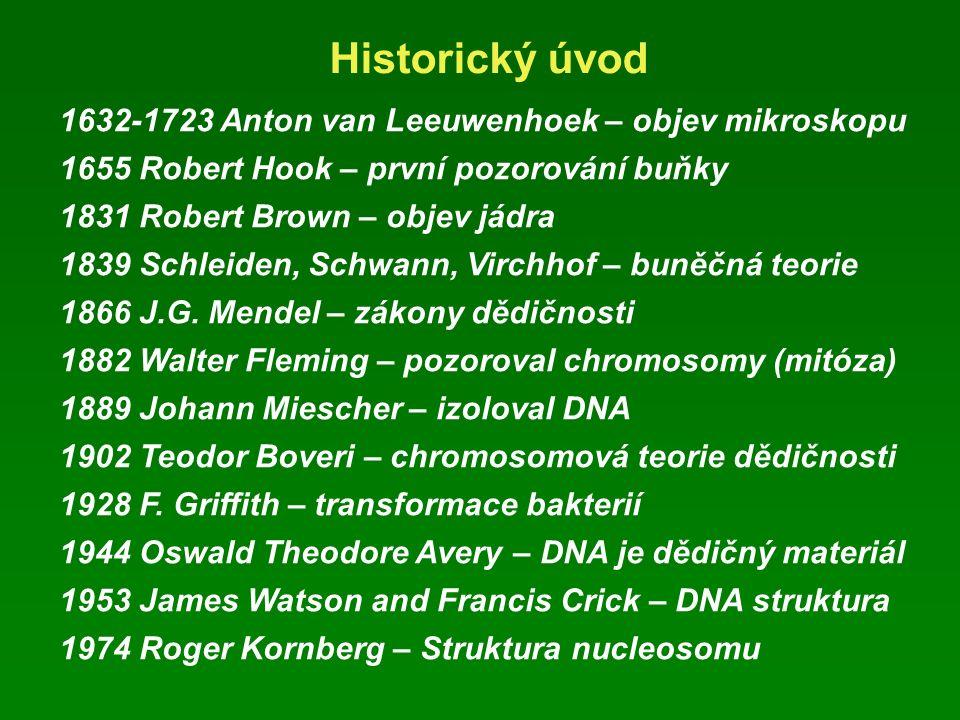 Historický úvod 1632-1723 Anton van Leeuwenhoek – objev mikroskopu 1655 Robert Hook – první pozorování buňky 1831 Robert Brown – objev jádra 1839 Schleiden, Schwann, Virchhof – buněčná teorie 1866 J.G.