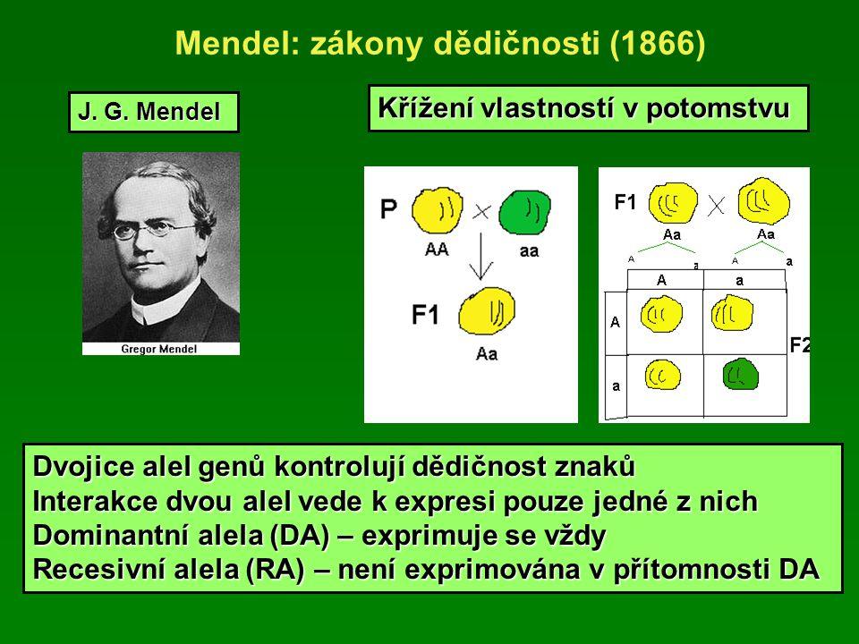 Mendel: zákony dědičnosti (1866) Křížení vlastností v potomstvu J.