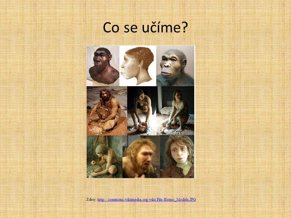 Co se učíme? Zdroj: http://commons.wikimedia.org/wiki/File:Homo_Models.JPGhttp://commons.wikimedia.org/wiki/File:Homo_Models.JPG