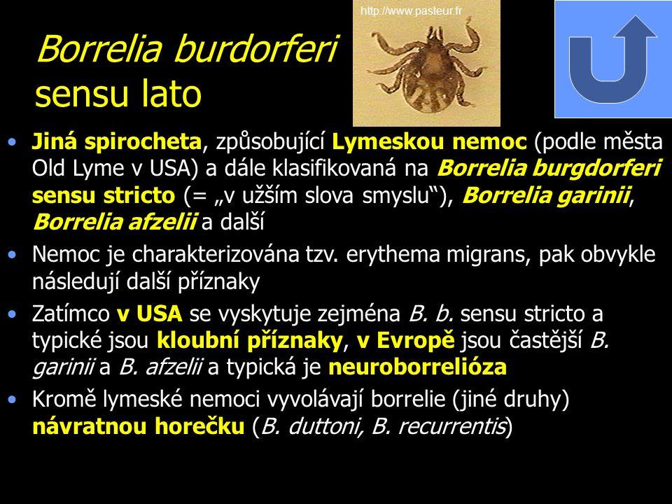 Borrelia burdorferi sensu lato Jiná spirocheta, způsobující Lymeskou nemoc (podle města Old Lyme v USA) a dále klasifikovaná na Borrelia burgdorferi s