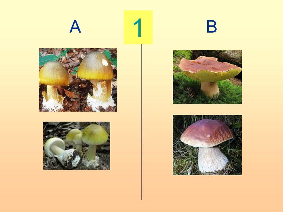 A B 1