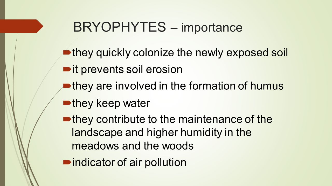 BRYOPHYTES – importance  they quickly colonize the newly exposed soil  it prevents soil erosion  they are involved in the formation of humus  they keep water  they contribute to the maintenance of the landscape and higher humidity in the meadows and the woods  indicator of air pollution