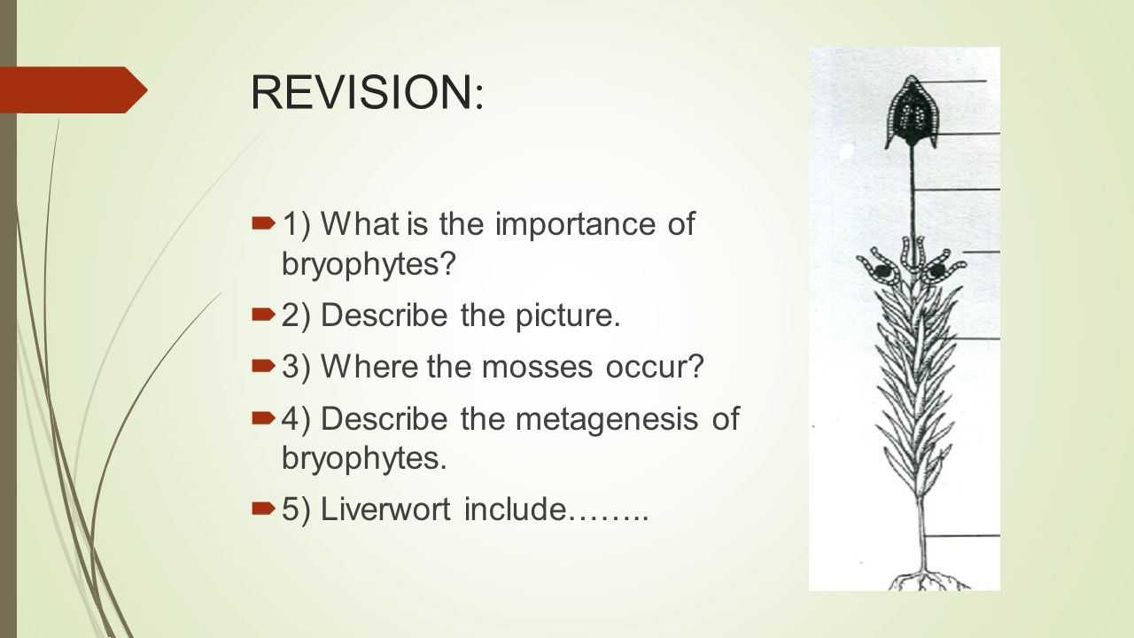 REVISION :  1) What is the importance of bryophytes.