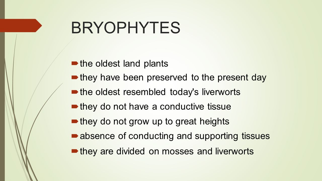BRYOPHYTES  the oldest land plants  they have been preserved to the present day  the oldest resembled today s liverworts  they do not have a conductive tissue  they do not grow up to great heights  absence of conducting and supporting tissues  they are divided on mosses and liverworts