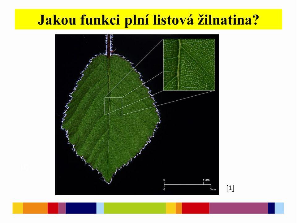 Jakou funkci plní listová žilnatina? [1 ] [2 ] [1 ]