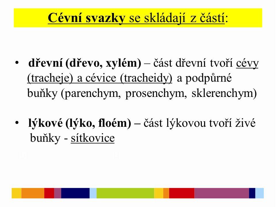 Cévní svazky se skládají z částí: [1 ] [2 ] dřevní (dřevo, xylém) – část dřevní tvoří cévy (tracheje) a cévice (tracheidy) a podpůrné buňky (parenchym, prosenchym, sklerenchym) lýkové (lýko, floém) – část lýkovou tvoří živé buňky - sítkovice