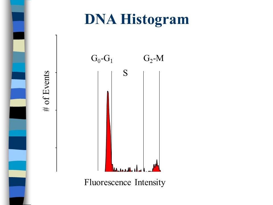 DNA Histogram G 0 -G 1 S G 2 -M Fluorescence Intensity # of Events