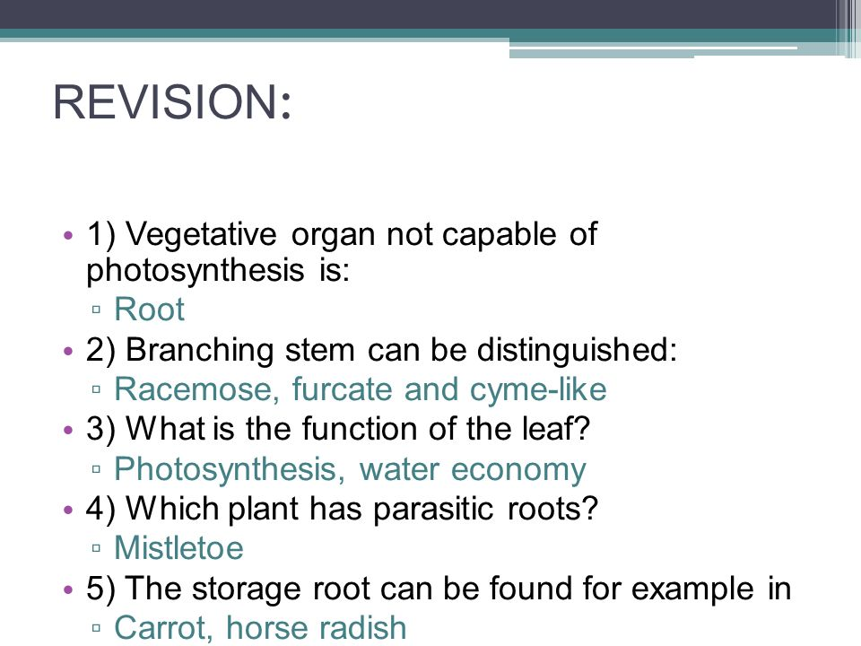 REVISION : 1) Vegetative organ not capable of photosynthesis is: ▫ Root 2) Branching stem can be distinguished: ▫ Racemose, furcate and cyme-like 3) What is the function of the leaf.