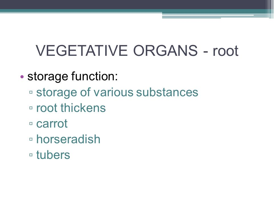 VEGETATIVE ORGANS - root storage function: ▫ storage of various substances ▫ root thickens ▫ carrot ▫ horseradish ▫ tubers