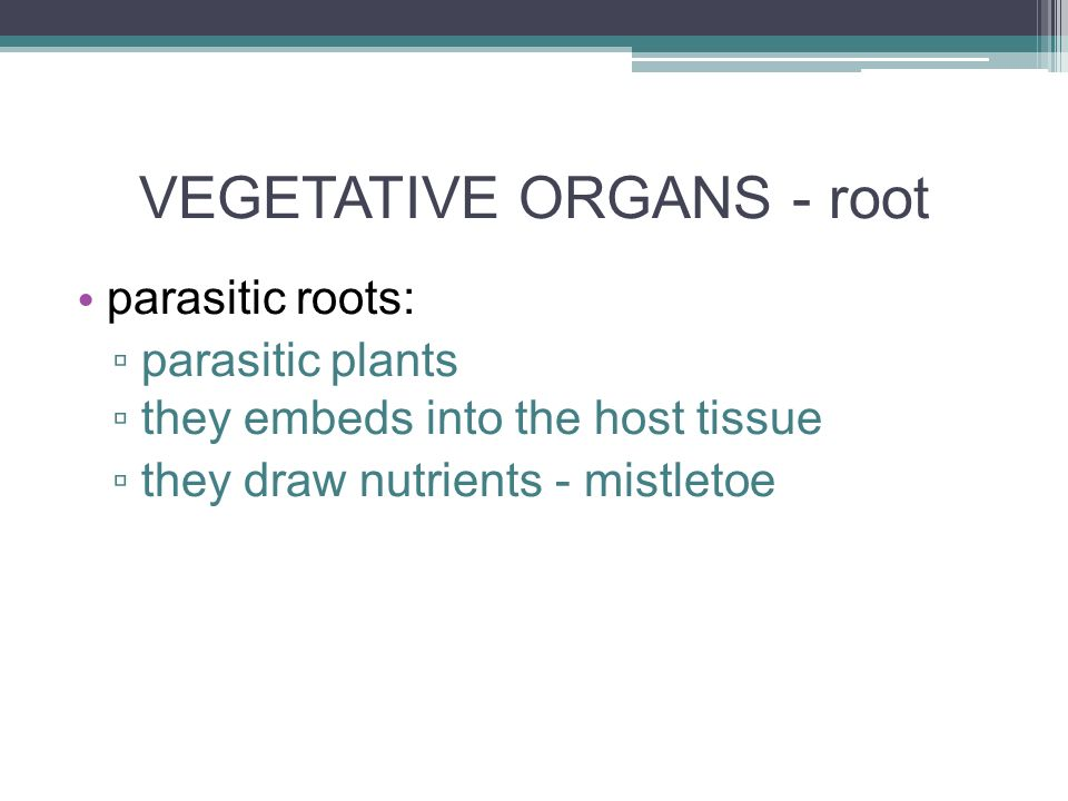 VEGETATIVE ORGANS - root parasitic roots: ▫ parasitic plants ▫ they embeds into the host tissue ▫ they draw nutrients - mistletoe