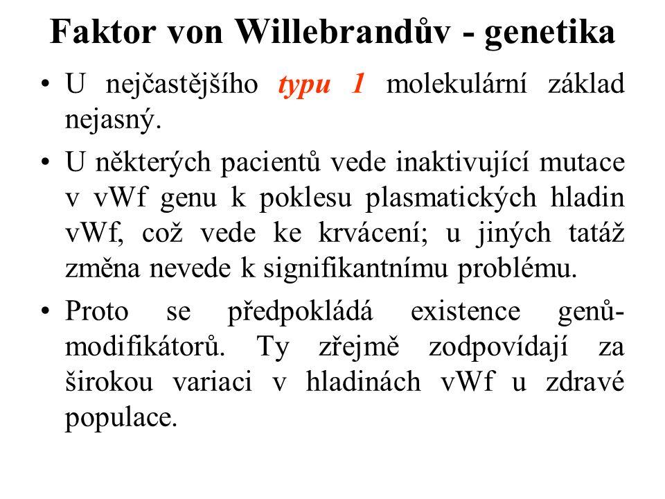 Faktor von Willebrandův - genetika U nejčastějšího typu 1 molekulární základ nejasný. U některých pacientů vede inaktivující mutace v vWf genu k pokle