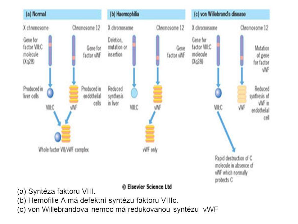 (a) Syntéza faktoru VIII. (b) Hemofilie A má defektní syntézu faktoru VIIIc. (c) von Willebrandova nemoc má redukovanou syntézu vWF