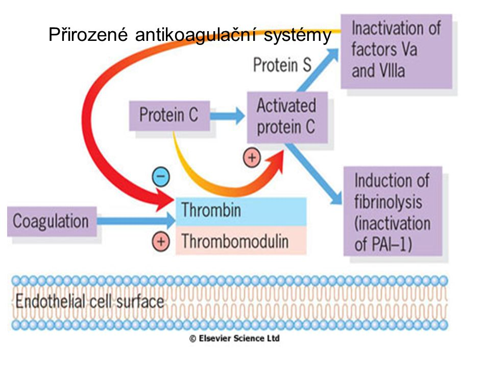 Přirozené antikoagulační systémy