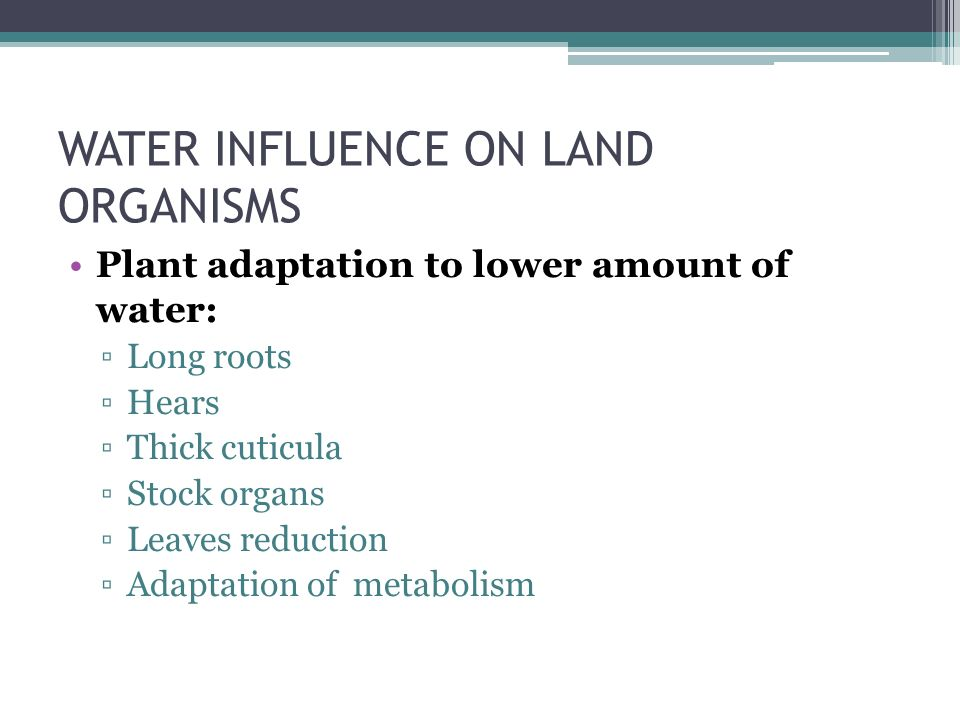 WATER INFLUENCE ON LAND ORGANISMS Plant adaptation to lower amount of water: ▫Long roots ▫Hears ▫Thick cuticula ▫Stock organs ▫Leaves reduction ▫Adaptation of metabolism
