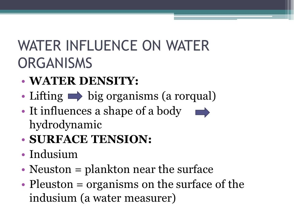 WATER INFLUENCE ON WATER ORGANISMS WATER DENSITY: Lifting big organisms (a rorqual) It influences a shape of a body hydrodynamic SURFACE TENSION: Indusium Neuston = plankton near the surface Pleuston = organisms on the surface of the indusium (a water measurer)