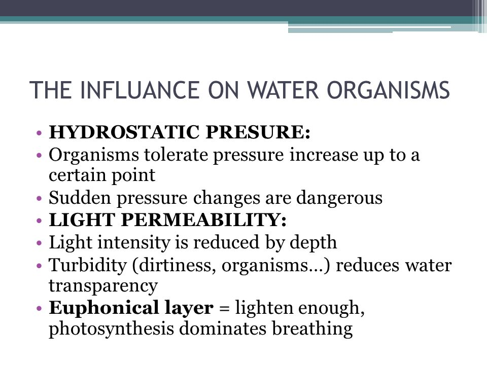 THE INFLUANCE ON WATER ORGANISMS HYDROSTATIC PRESURE: Organisms tolerate pressure increase up to a certain point Sudden pressure changes are dangerous LIGHT PERMEABILITY: Light intensity is reduced by depth Turbidity (dirtiness, organisms…) reduces water transparency Euphonical layer = lighten enough, photosynthesis dominates breathing