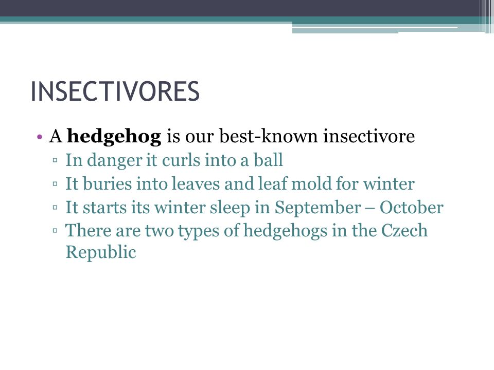 INSECTIVORES A hedgehog is our best-known insectivore ▫In danger it curls into a ball ▫It buries into leaves and leaf mold for winter ▫It starts its w