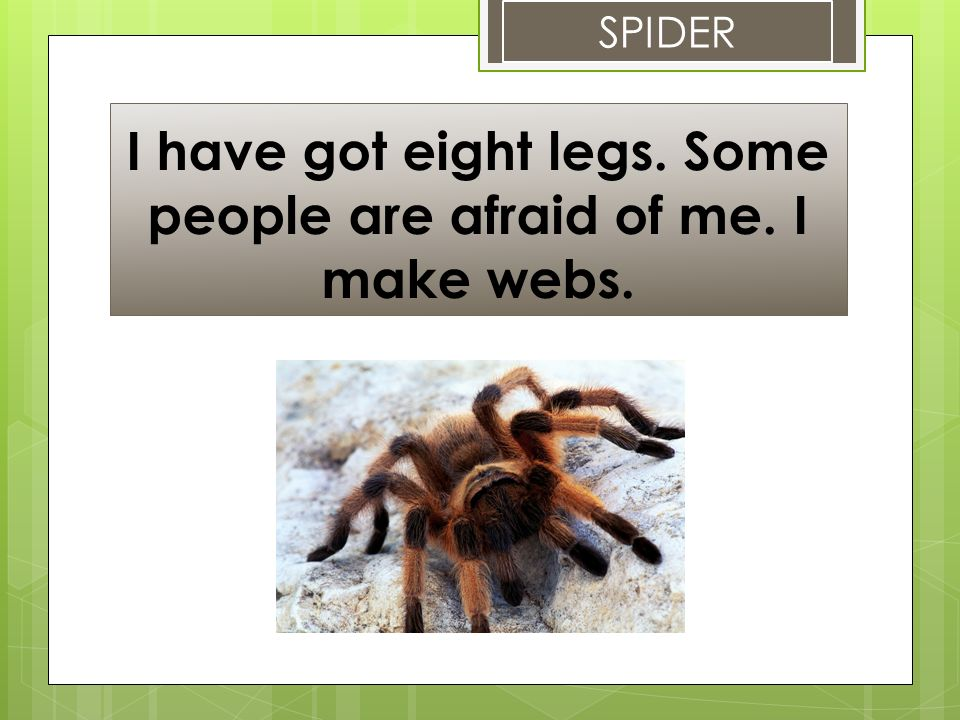 I have got eight legs. Some people are afraid of me. I make webs. SPIDER