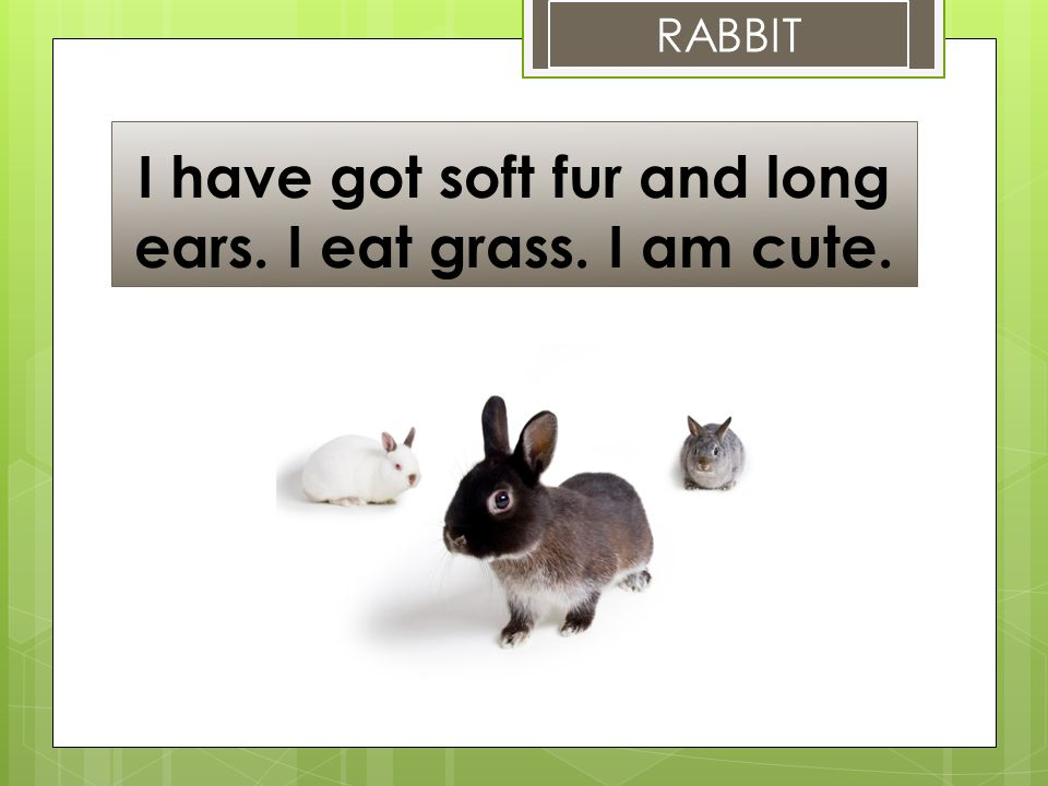 I have got soft fur and long ears. I eat grass. I am cute. RABBIT