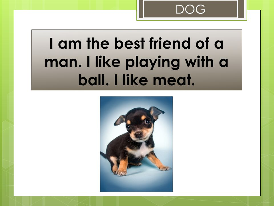 I am the best friend of a man. I like playing with a ball. I like meat. DOG
