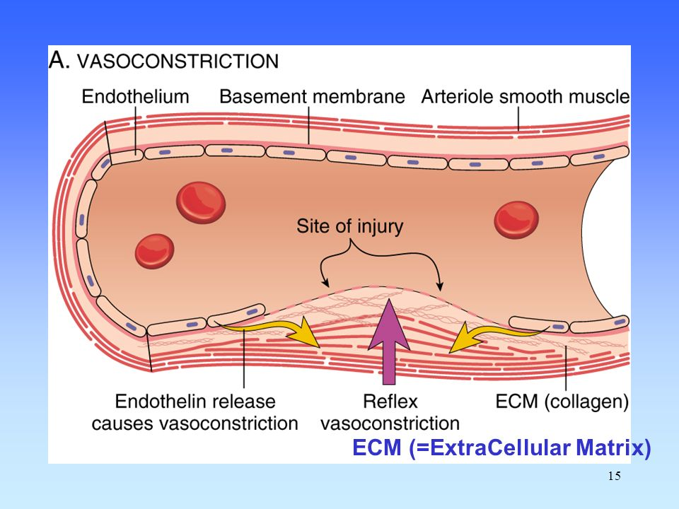 15 ECM (=ExtraCellular Matrix)