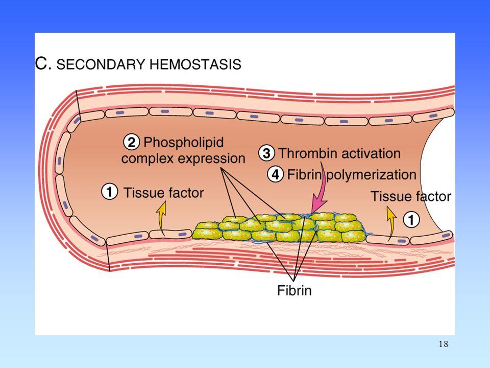 19 Fibrinogen Fibrin Thrombin Prothrombin Xa Va VIIa TF Extrinsic Pathway IXa VIIIa XIa XIIa Intrinsic pathway XIIIa Soft clot Fibrin Hard clot V VIII Coagulation
