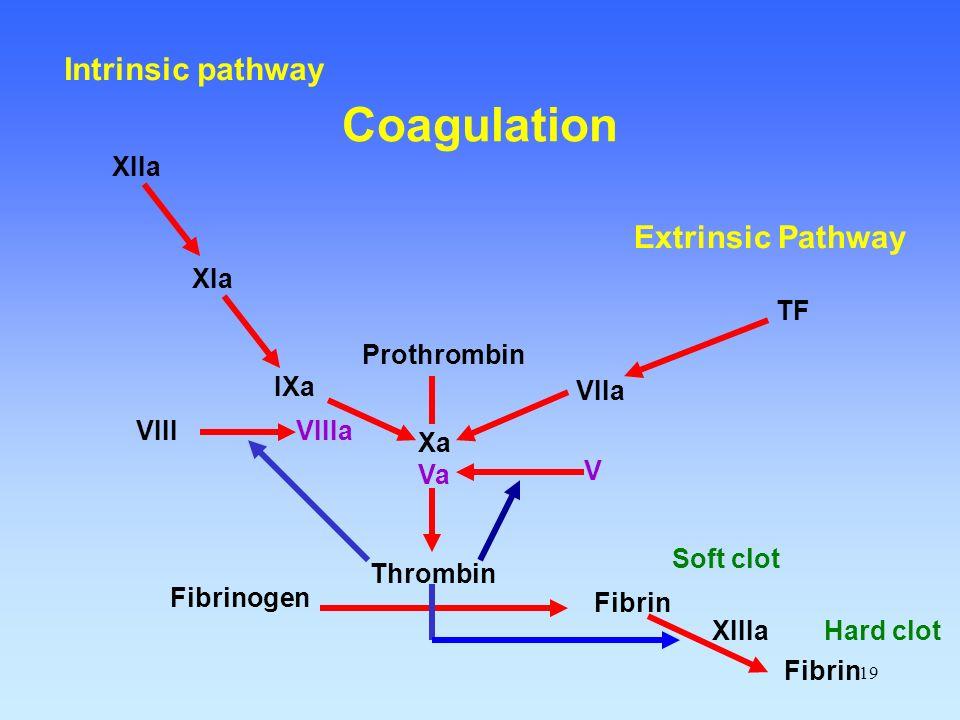19 Fibrinogen Fibrin Thrombin Prothrombin Xa Va VIIa TF Extrinsic Pathway IXa VIIIa XIa XIIa Intrinsic pathway XIIIa Soft clot Fibrin Hard clot V VIII