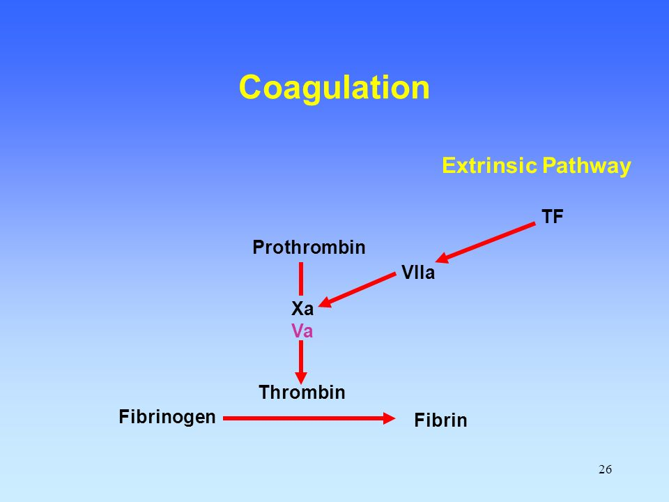 26 Fibrinogen Fibrin Thrombin Prothrombin Xa Va VIIa TF Coagulation Extrinsic Pathway