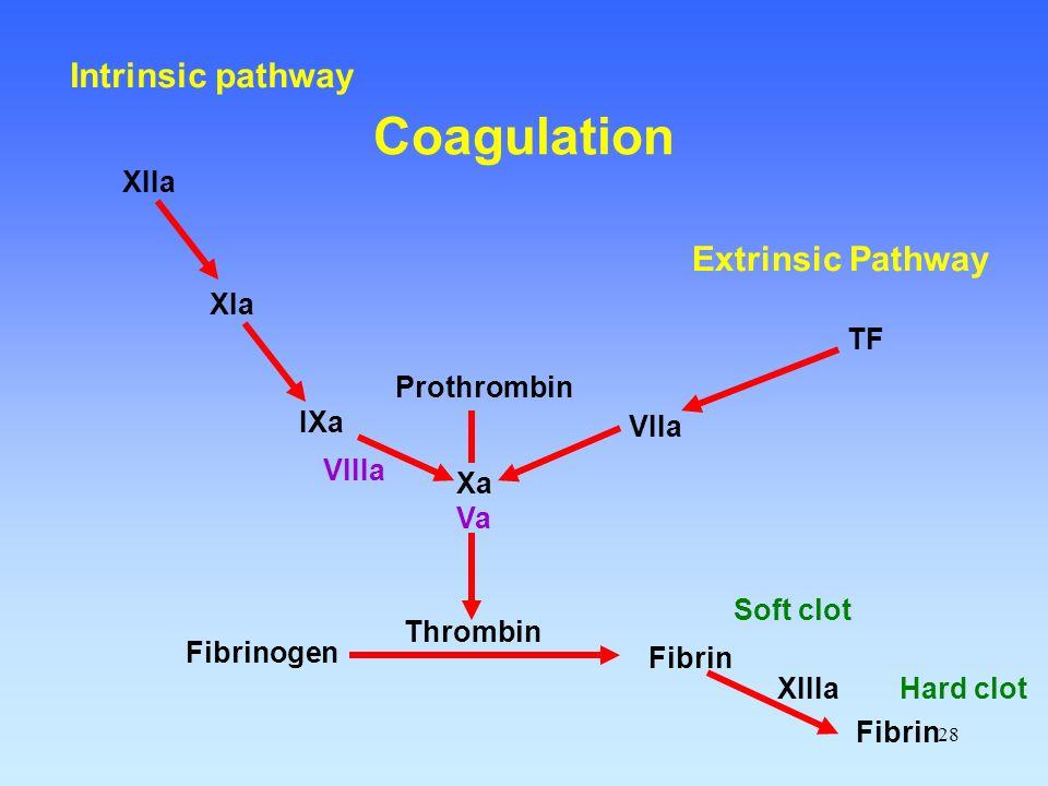 28 Fibrinogen Fibrin Thrombin Prothrombin Xa Va VIIa TF IXa VIIIa XIa XIIa XIIIa Soft clot Fibrin Hard clot Extrinsic Pathway Intrinsic pathway Coagul