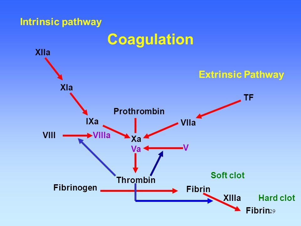 29 Fibrinogen Fibrin Thrombin Prothrombin Xa Va VIIa TF IXa VIIIa XIa XIIa XIIIa Soft clot Fibrin Hard clot V VIII Extrinsic Pathway Intrinsic pathway