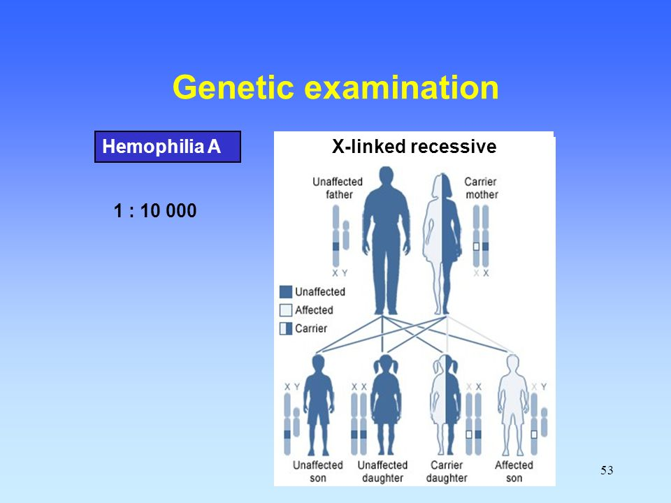 53 Genetic examination Hemophilia A X-linked recessive 1 : 10 000