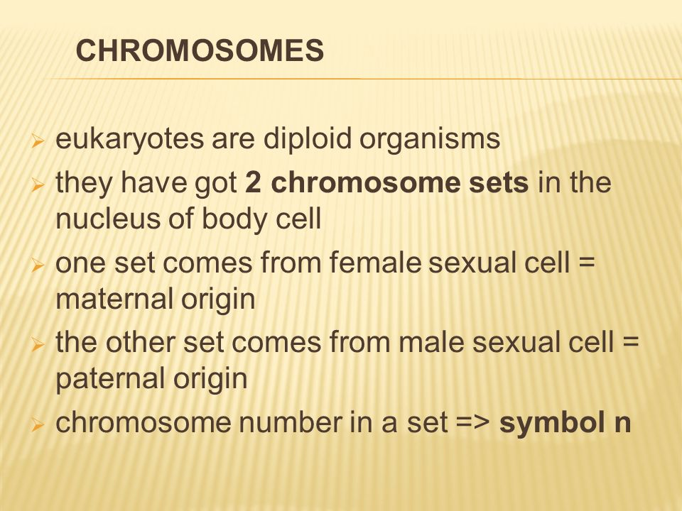  eukaryotes are diploid organisms  they have got 2 chromosome sets in the nucleus of body cell  one set comes from female sexual cell = maternal origin  the other set comes from male sexual cell = paternal origin  chromosome number in a set => symbol n CHROMOSOMES