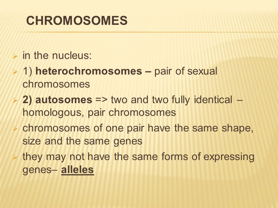  in the nucleus:  1) heterochromosomes – pair of sexual chromosomes  2) autosomes => two and two fully identical – homologous, pair chromosomes  c