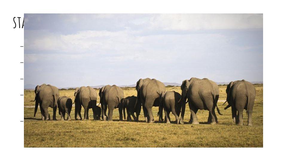 stáda  příbuzné samice tvoří skupiny  vede je nejstarší samice  mladí samci stádo opouští  samci - samotářský život, připojují se ke stádu jen v o