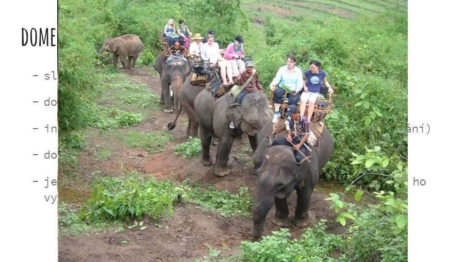 domestikace  sloni byli a jsou využíváni k různým účelům  domestikace hlavně i. slonů  ind. sloni - transport, práce, zábava (cirkus, malování)  d