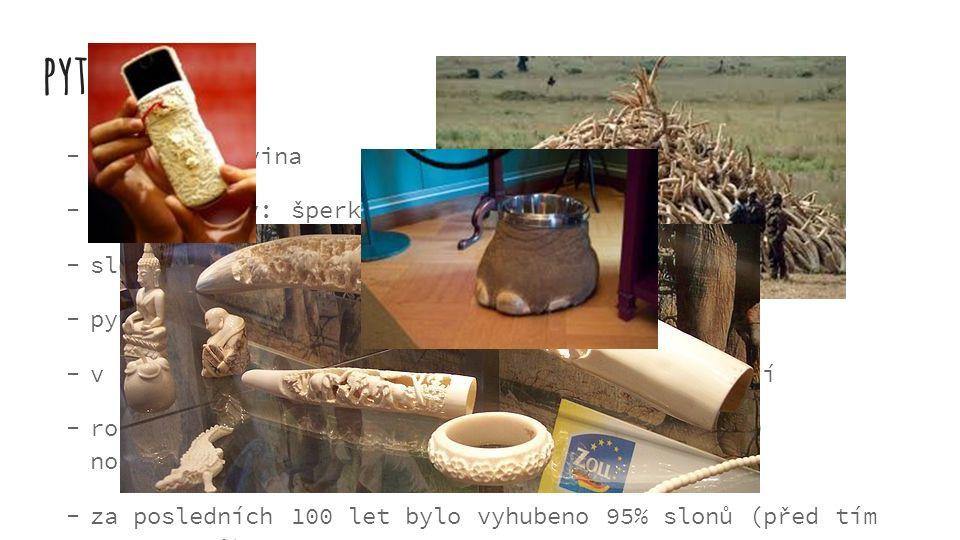 pytláctví  kly = slonovina  ze slonoviny: šperky, nádoby…  slonovina velmi drahá  pytláci - odbyt v Asii  v Asii lidé ani neví že sloni kvůli tom