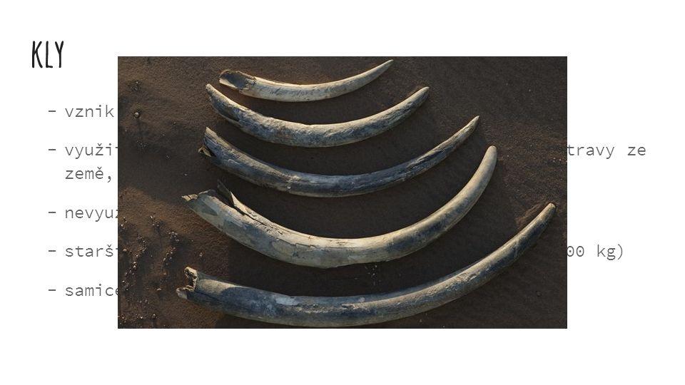 kly  vznik: přeměna 2 řezáků (horní čelist)  využití: olupování kůry ze stromů, vyhrabávání potravy ze země,  nevyužívají se k boji  starší samci